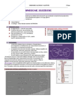Sindrome Ulceroso PDF