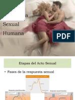 Acto Sexual Del Ser Humano