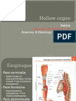 Hollow Organ