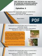 Cochinilla Rosada (Maconellicoccus hirsutus)