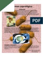 P_2562_EXAMEN COPROLOGICO.pdf