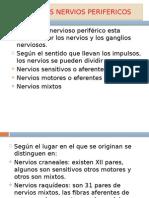Principales Nervios Perifericos