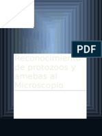 Reconocimiento de Protozoos y Amebas Al Microscopio