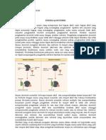 tugas enzim alosterik
