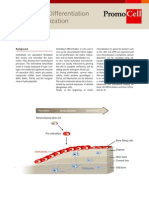 Osteoblast Differentiation and Mineralization