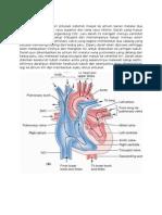 Sirkulasi Jantung