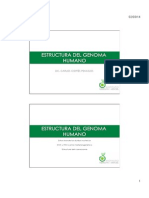 Estructura del GENOMA Humano.