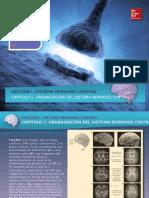 Martin Figuras Sistema Nervioso