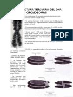 21 - Cromosomas. Estructura Terciaria de Los Ácidos Nucleicos.