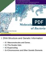 molecular biology of bacteria