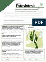 B-16 Fotosíntesis.pdf