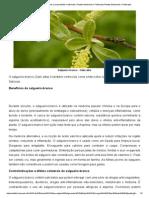 Salgueiro-branco – Salix Alba