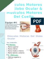 musculosdelojoymsculosdelcuello-130318200410-phpapp02