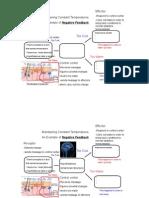 thermoregulation pdf