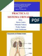 [Lab] Histologia - Sistema Urinario