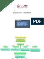 SEMINARIO3 FINAL EMBRIOLOGÍA (1).docx