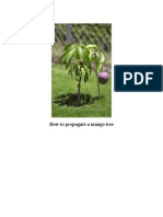 How to Propogate a Mango Tree