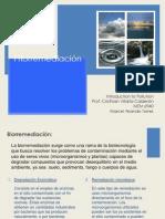 Fitorremediación (Marcel Airando)