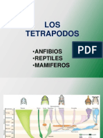 3.anfibios-modificada