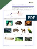 1P CM Clases_de_vertebrados b