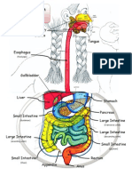 digestive_system_lab_2007.pdf