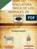 GUÍA DE NOMENCLATURA ANATÓMICA DE LOS ANIMALES DE.pptx
