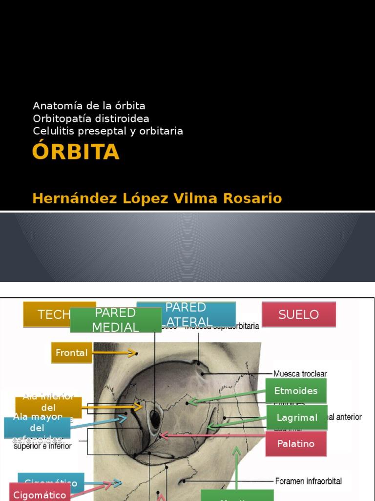 anatomía de la órbita
