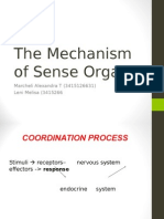 The Mechanism of Sense Organ