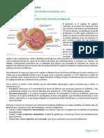 Clase 3 - Glomerulopatías universidad de talca