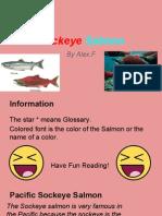 sockeye salmon presentation!