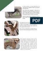 Imágenes y descripción de los perros que estarán en TresAguas el domingo buscando hogar