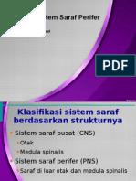 Kp 1.3.2.3 Fisiologi Sistem Saraf Perifer