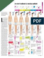 clasificacion de cuerpos humanos