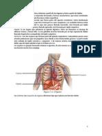 Conformación de Los Aparatos y Sistemas a Partir de Los Órganos y Éstos a Partir de Tejidos