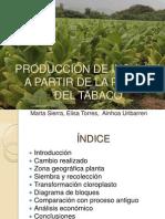 Producción de insulina en el tabaco