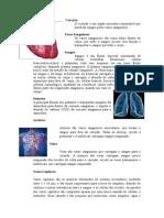 Esepcialidade Coração e Sistema Circulatório