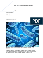Texto Bacterias