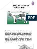 aparatodigestivorumiantes1-091120064415-phpapp01