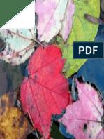 otoño.pdf