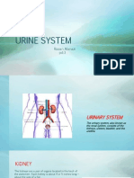 urine system 1