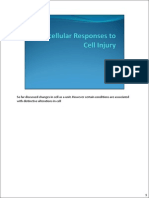 4- Subcellular Responses to Cell Injury
