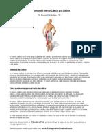 Quiropractico Freehold - Síntomas del Nervio Ciático y la Ciática