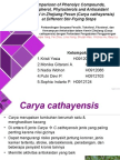 teknologi lemak dan minyak caya cathayensis