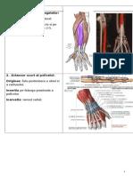 Colocviu Anatomie Muschi