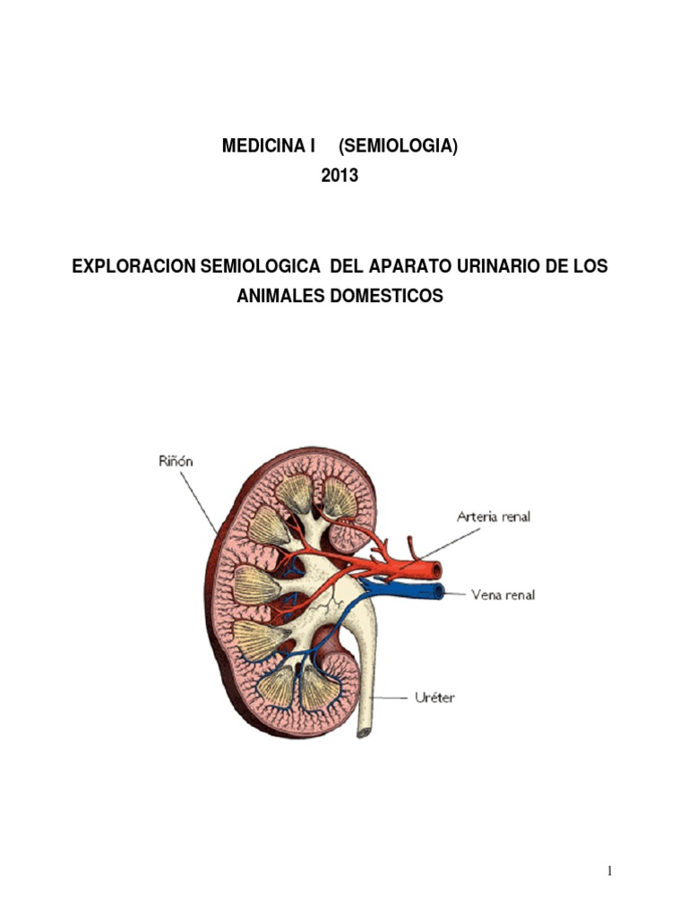 Moderno Diagrama Hembra Anatomía Urinaria Ilustración - Imágenes de ...