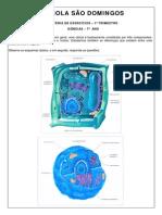 células - introdução.pdf