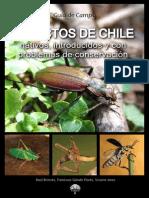Insectos de Chile