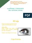 Anatomia y fisiologia vision