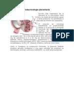 Endocrinología placentaria (1)