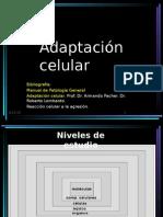 Adaptación Celular